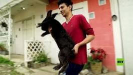 طبيب مكسيكى يربى أرانب عملاقة لاستخدامها فى دراسات طبية