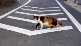 بالفيديو : قطة تلتزم بقواعد المرور!