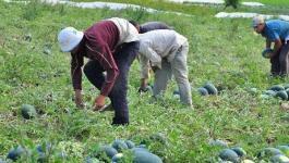 قرار جديد من وزارة الزراعة حول تصاريح الاستيراد للمنتجات