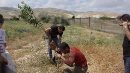 زراعة أشجار زيتون في أراض مهددة بالاستيلاء غرب نابلس.jpg