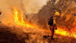 ما هي حصيلة حرائق الغابات بولاية كاليفورنيا؟!