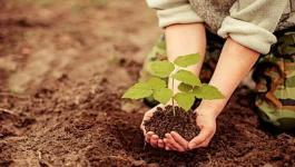 زراعة أشجار في الخليل احتفالا بيوم الشجرة.jpg