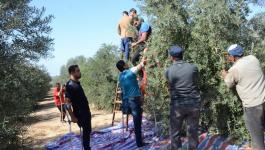 يوم تطوعي لقطف الزيتون في مردة وتوقيع اتفاقية لتسوية الأراضي.jpg