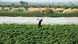 مطالبة الحكومة بتعويض المزارعين في الأغوار.jpg