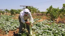 دراسة حول التحديات التي تواجه القطاع الزراعي في فلسطين.jpg