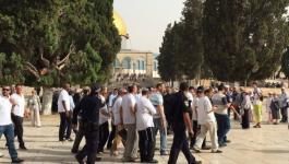 اقتحام المسجد الأقصى.jpg