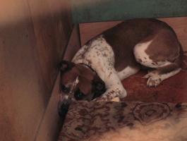 روسيا : اعتقال رجل حبس 70 كلبا ليأكل بعضها بعضا!