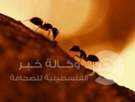 حركة مرور النمل