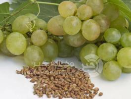 فوائد بذر العنب