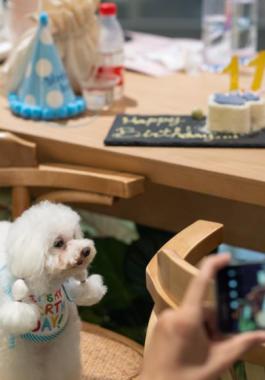 افتتاح أول مطعم للحيوانات الأليفة في مدينة شنجهاي بالصين