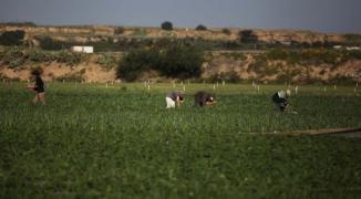 أراضي حكومية في شمال غزة