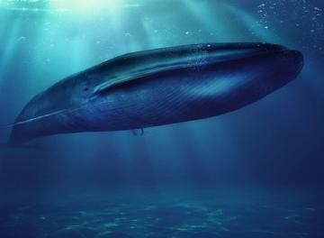 بالفيديو: غوّاص يسبح مع حوت أزرق ضخم في لقطات مثيرة!