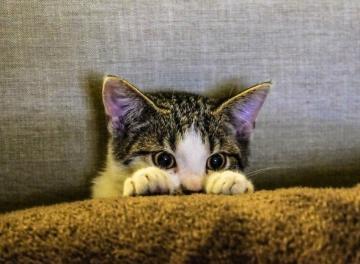 بالفيديو: قطة تتابع مسلسلا تلفزيونيا بشغف وتتفاعل مع المشاهد!