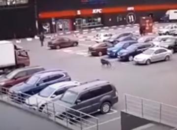 خنزير برى يحاول اقتحام متجر فى سانت بطرسبرج
