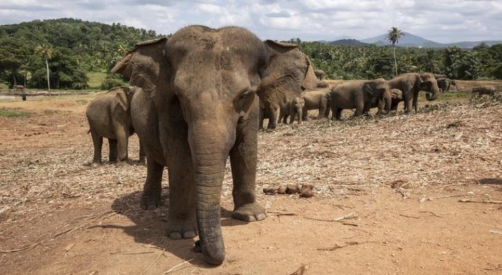 """بالفيديو: أبكت"""" البشر"""" قطيع فيلة يرتب """"جنازة"""" مؤثرة لصغيره النافق!"""