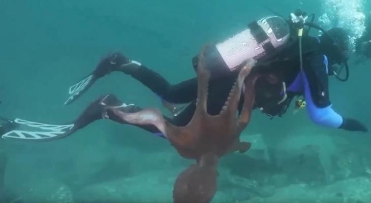 """بالفيديو: أخطبوط يحاول """"أسر"""" غواص بأذرعه الضخمة!"""