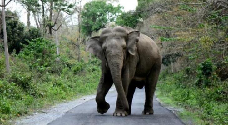 """شاهدوا: بخرطومه """"فيل"""" ينقل """"طفلة"""" من فراشها إلى الشارع ويقتلها!"""