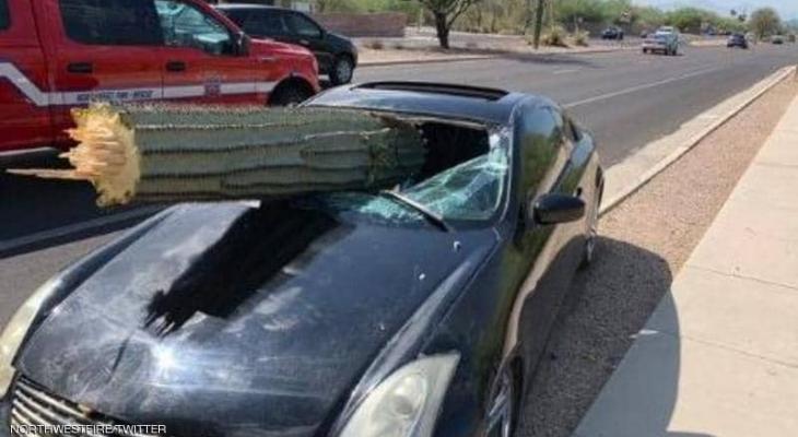 """شجرة صبار تخترق سيارة مسرعة.. و""""المعجزة تتحقق"""""""