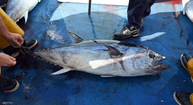 """يصطادون """"سمكة"""" قيمتها 3 ملايين """"دولار"""" ويلقون بها في البحر ZwOxA"""