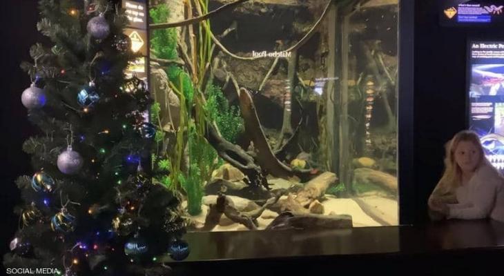 """بالفيديو: """"كهرباء السمك"""" تضيء شجرة عيد الميلاد"""