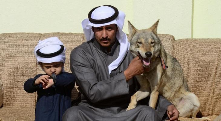 """بالفيديو: أسرة """"سعودية"""" تعيش مع """"الذئاب"""" منذ 11 عاما"""