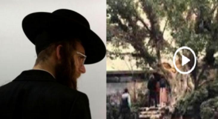 """بالفيديو :  """"الشجرة"""" التي يختبئ ورائها """"اليهود"""" آخر الزمان"""