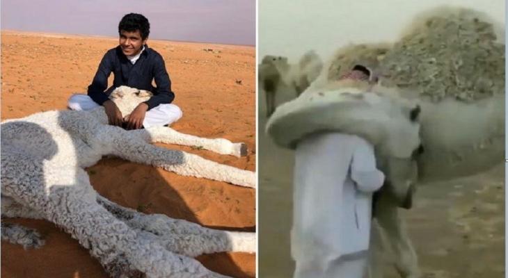 """بالفيديو و الصور: سعودي يروي سر """"عناق ناقة"""" له يوميا"""
