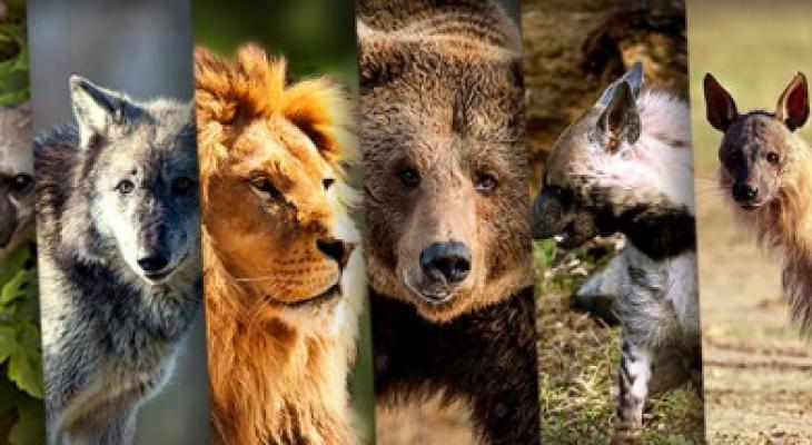 """شاهدوا : أضخم معارك """"الحيوانات"""" المفترسة على وجه الارض!"""