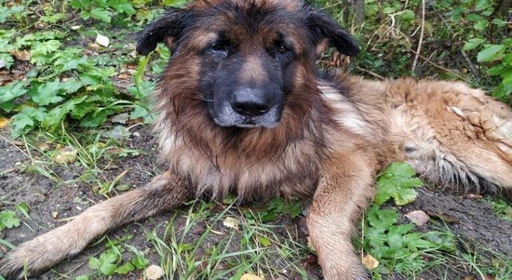 """شاهدوا: كلب روسي دفنته """"صاحبته"""" حيا في غابة فعاد إليها"""