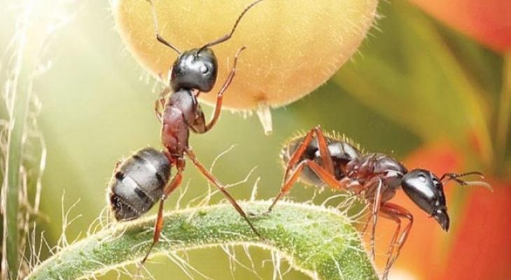 """هل تعلم ان """"النمل"""" يمتلك  قوة جسدية هائلة؟"""