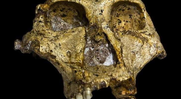 جمجمة عمرها مليون سنة