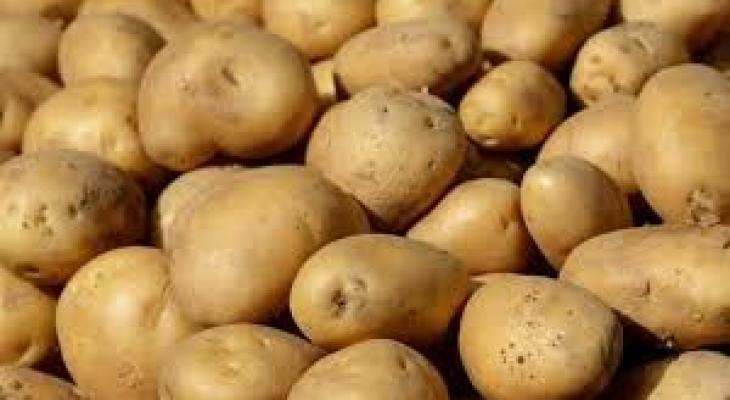 """الزراعة تُصدر بيانًا توضيحيًا يتعلق بشاحنة """"البطاطا"""" في طوباس"""
