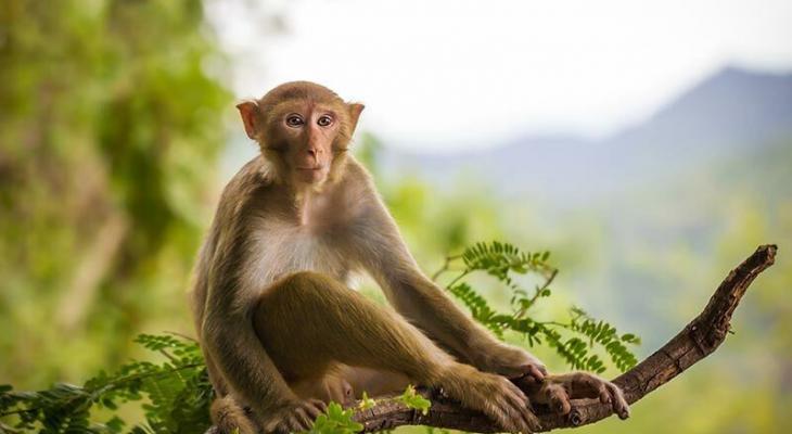 بالفيديو | قطعان من القردة تثير قلق سكان منطقة في السعودية