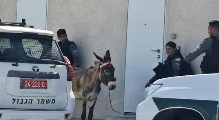 اعتقال حمار