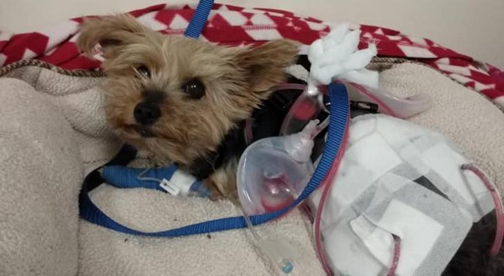 """""""كلبة"""" تنقذ مالكتها من هجوم ذئب بري بأحد شوارع كندا"""