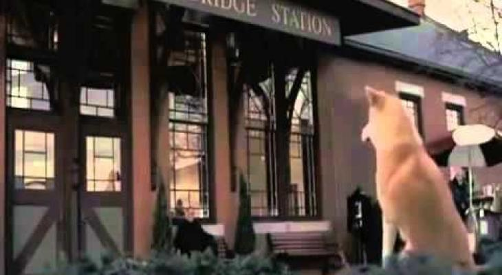 بالفيديو: كلب ينتظر أصحابه عاما كاملا في نفس المكان
