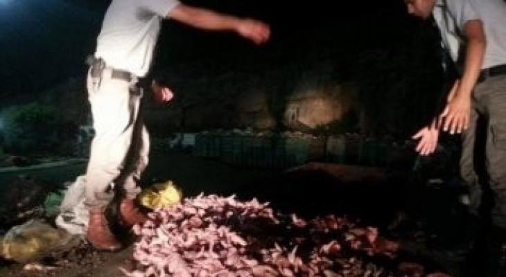 إتلاف كمية من اللحوم تالفة في أريحا.jpg
