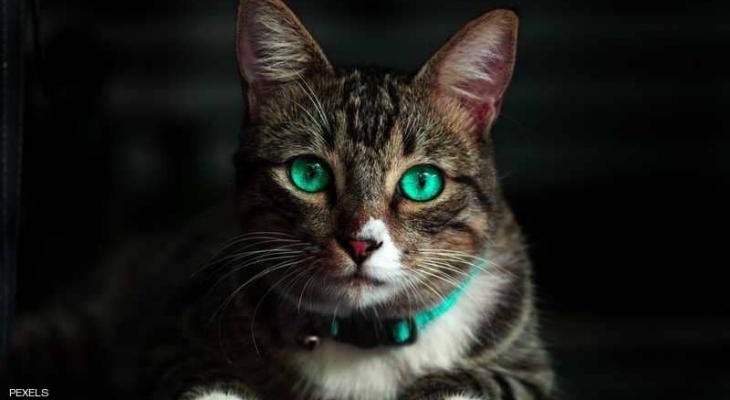"""السبب """"قطة"""" 3 سنوات من التقاضي بالمحاكم التركية"""