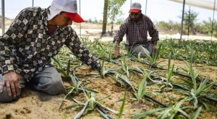خسائر القطاع الزراعي