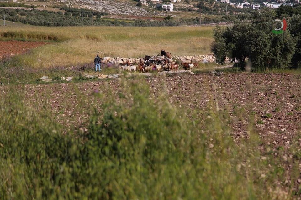 جمال طبيعة فلسطين LVoAV
