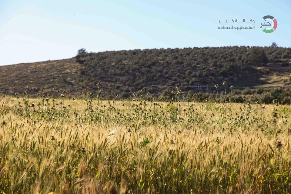 جمال طبيعة فلسطين OkQTx