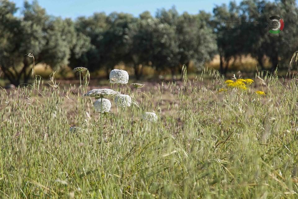 جمال طبيعة فلسطين J3VH7