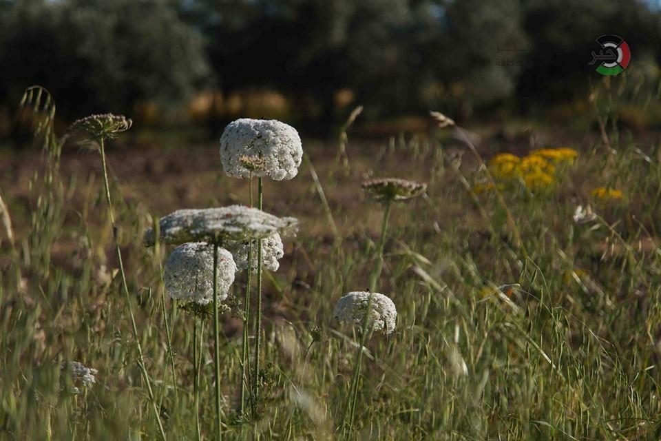 جمال طبيعة فلسطين VFRJg