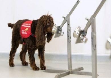 """شاهدوا: الجيش النمساوي يدرب """"الكلاب"""" على رصد فيروس كورونا"""