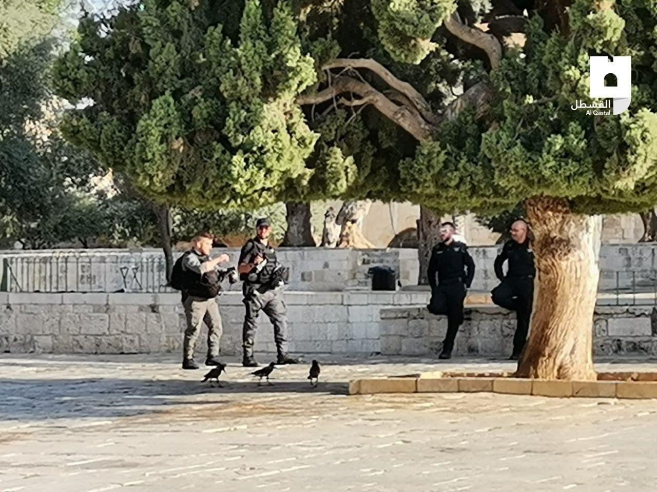 عشرات المستوطنين برفقة شرطة الاحتلال يقتحمون باحات المسجد الأقصى صبيحة يوم عرفة