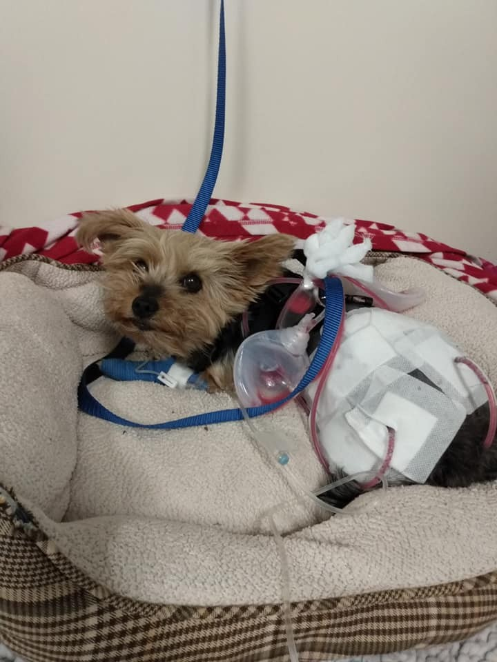 63934-الكلب-يتلقى-العلاج.jpg