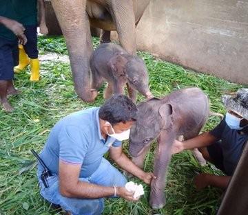 35031-ولادة-الفيلة.jpg